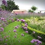 Tuin met paarse bloemen